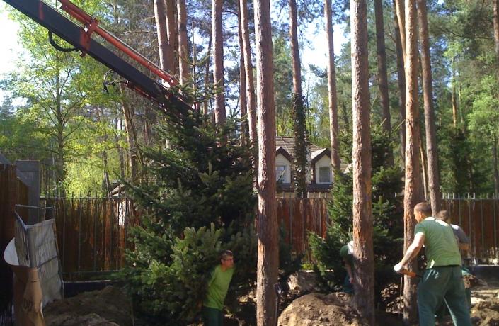 20sadzenie drzew soliterowych3