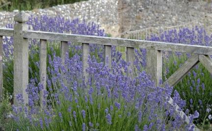 Inspiracje - Ogród Norfolk - zdjęcie 5